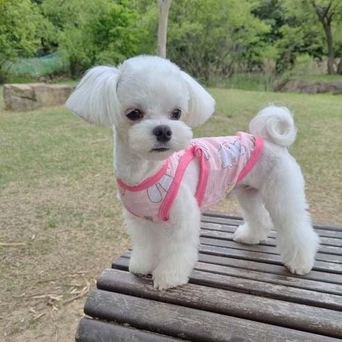 펫라이엇 강아지 옷 리넨 메쉬 민소매 나시 실내복 티셔츠XS